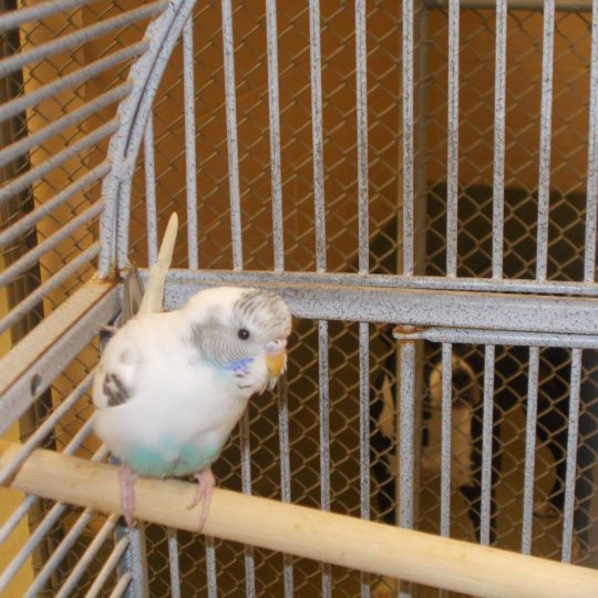 Of Parakeets and Rescue Bears